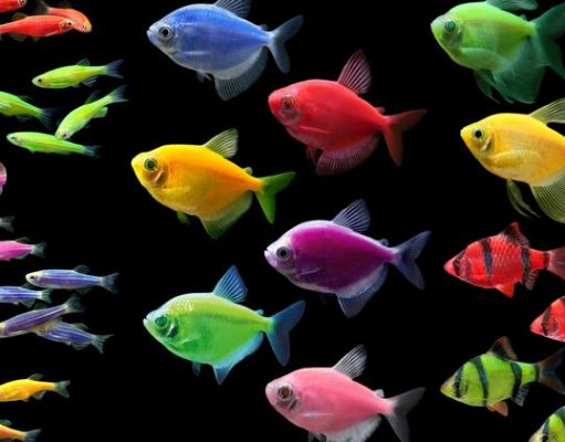 Learn a few things about the popular cichlids
